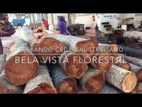 SERRANDO CEDRO AUSTRALIANO