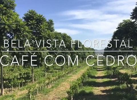 CONSÓRCIO DE CAFÉ COM CEDRO AUSTRALIANO